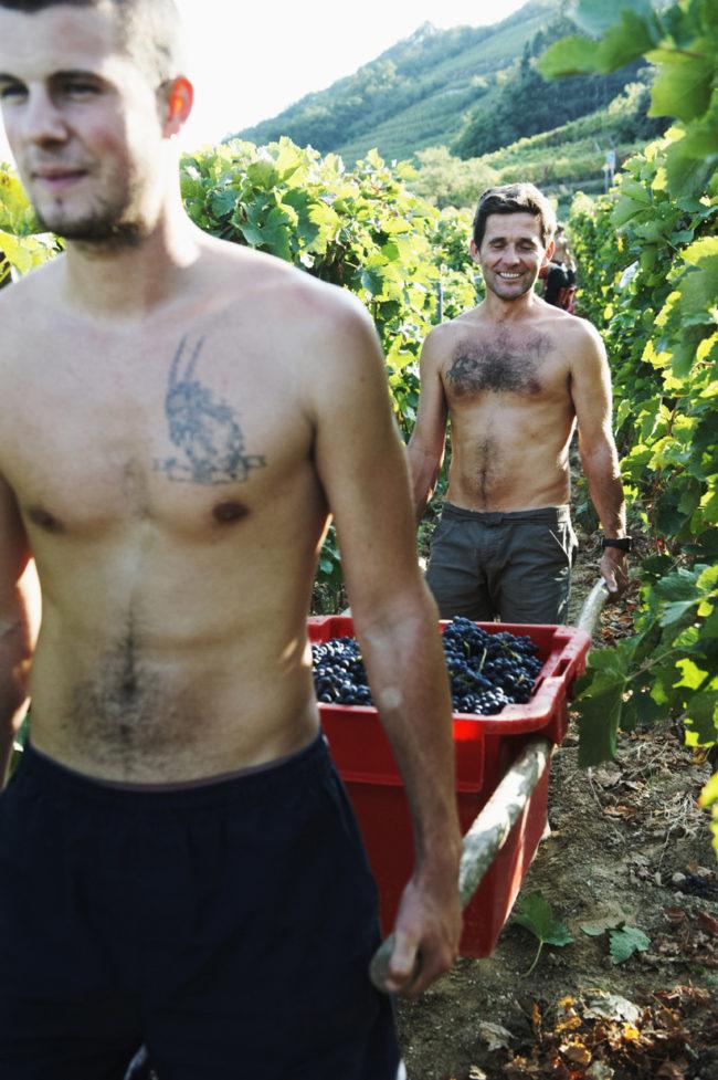 Syrah et vignerons