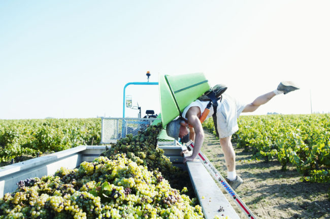 Muscadet organic producers
